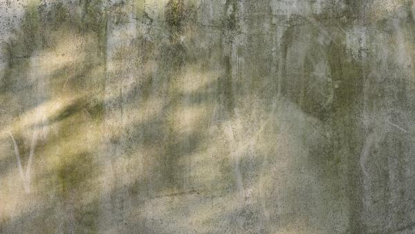 Concrete wall with moss and patches of light